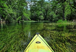 Silver Springs is one of more than 600 natural springs in Florida