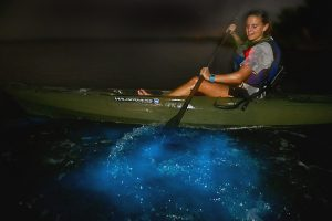 Bioluminescent kayaking in Florida